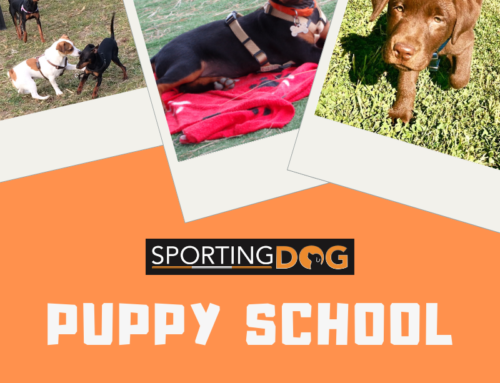 A Febbraio riparte la Puppy School