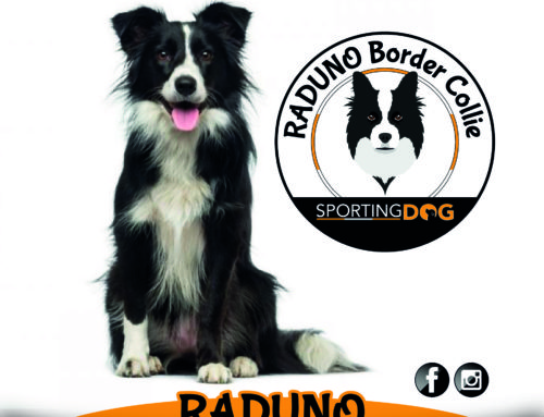 Raduno Border Collie Roma 2019