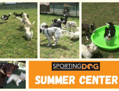 SUMMER CENTER: il 1° Centro Estivo per Cani