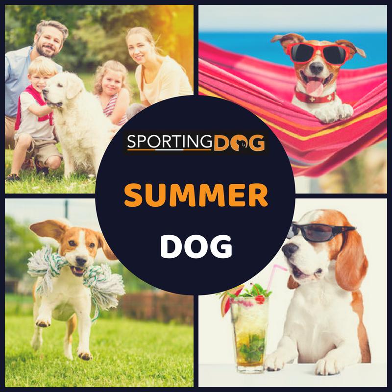 Summer Dog, l'evento dell'estate!