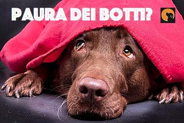 Il tuo cane ha paura dei botti?
