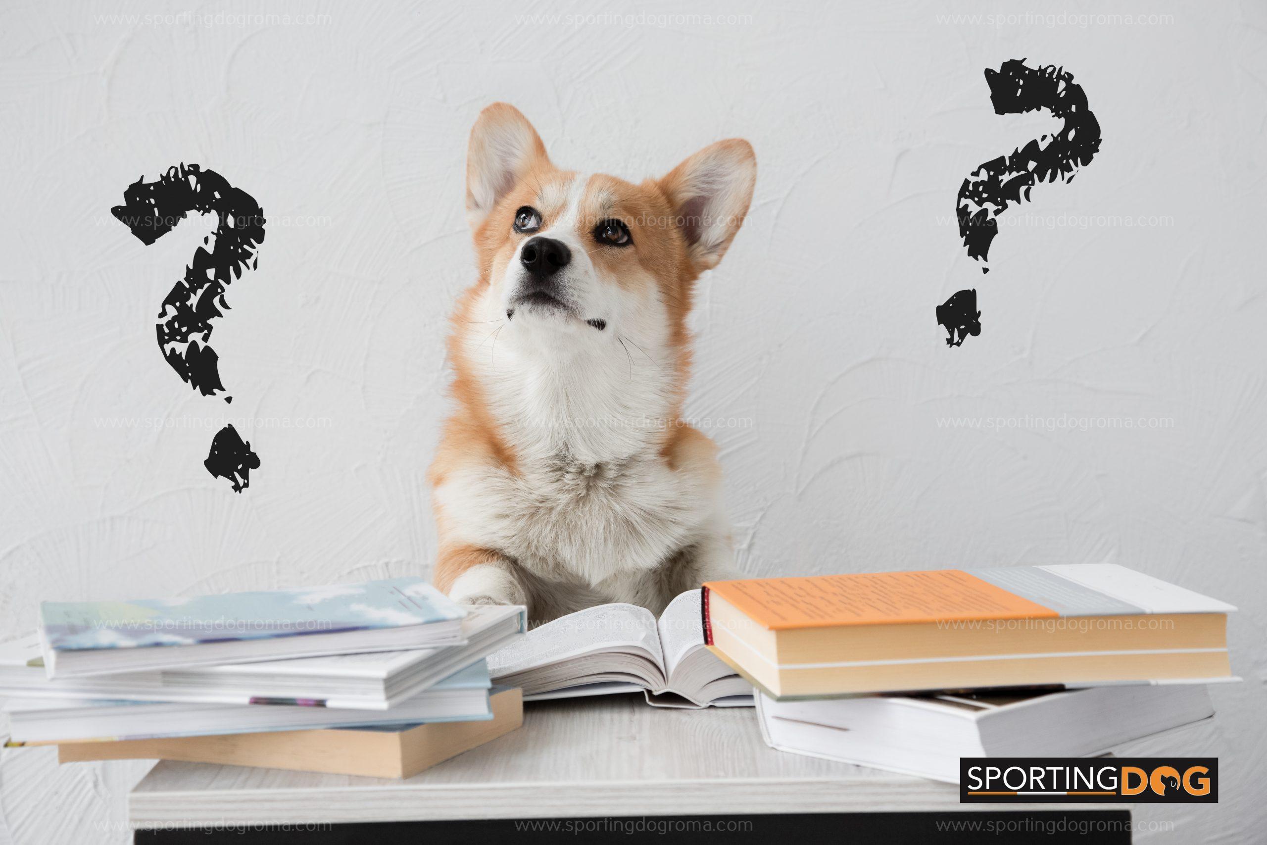 Come scegliere una buona Scuola per il mio cane